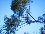 Nesting egret.